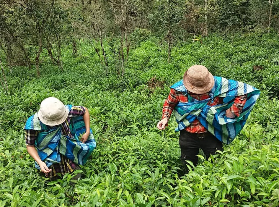 Eco-Agriculture Conservation Volunteer Project in Peru - Cusco