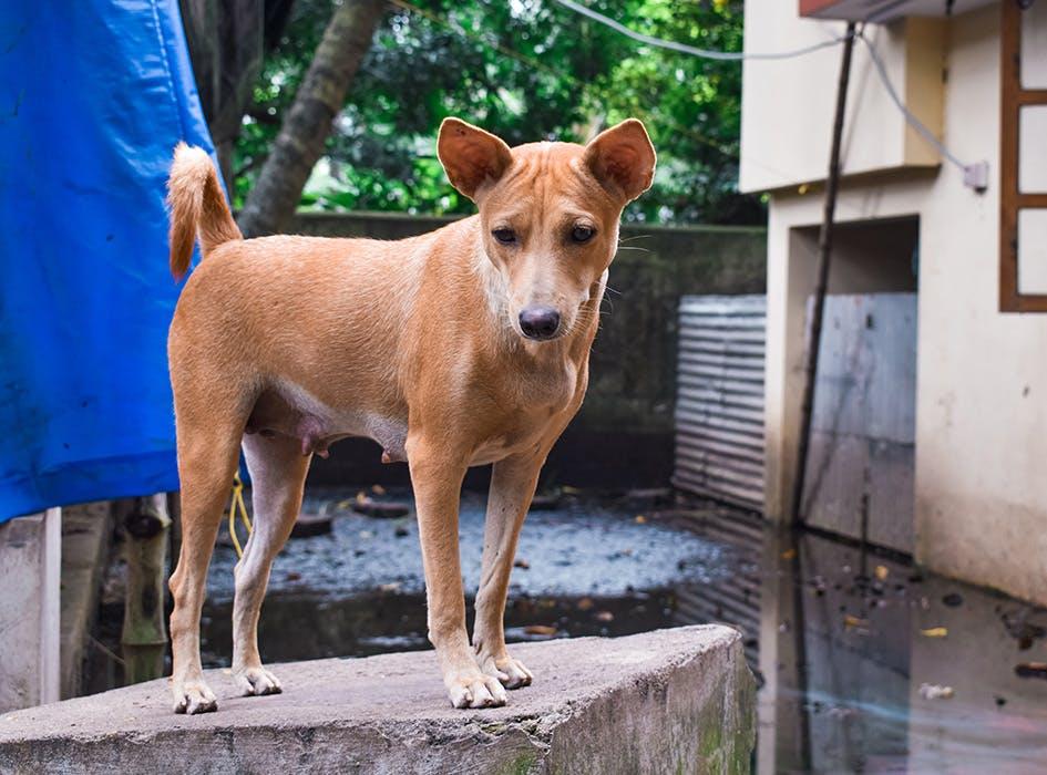 Animal Care Volunteer Program in Lima - Peru