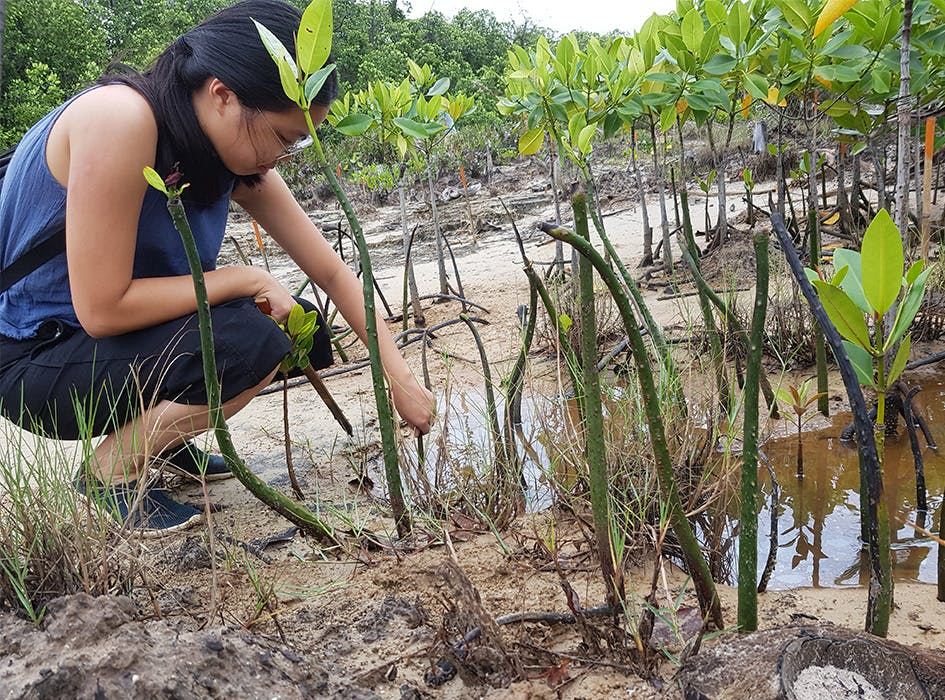 Environmental Volunteer Project in the Philippines - Palawan