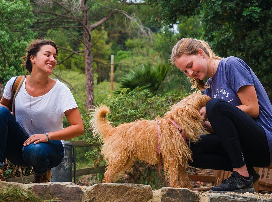 Animal Care Volunteer Project in Spain - Barcelona