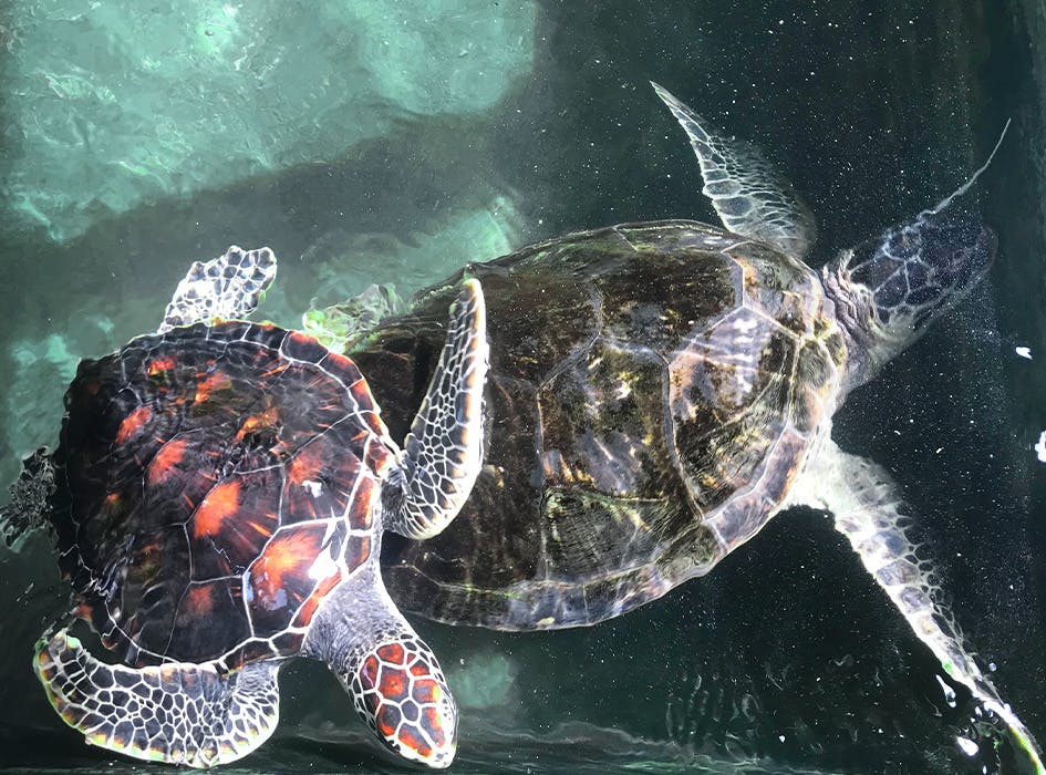 Sea Turtle Conservation Volunteer Program in Sri Lanka