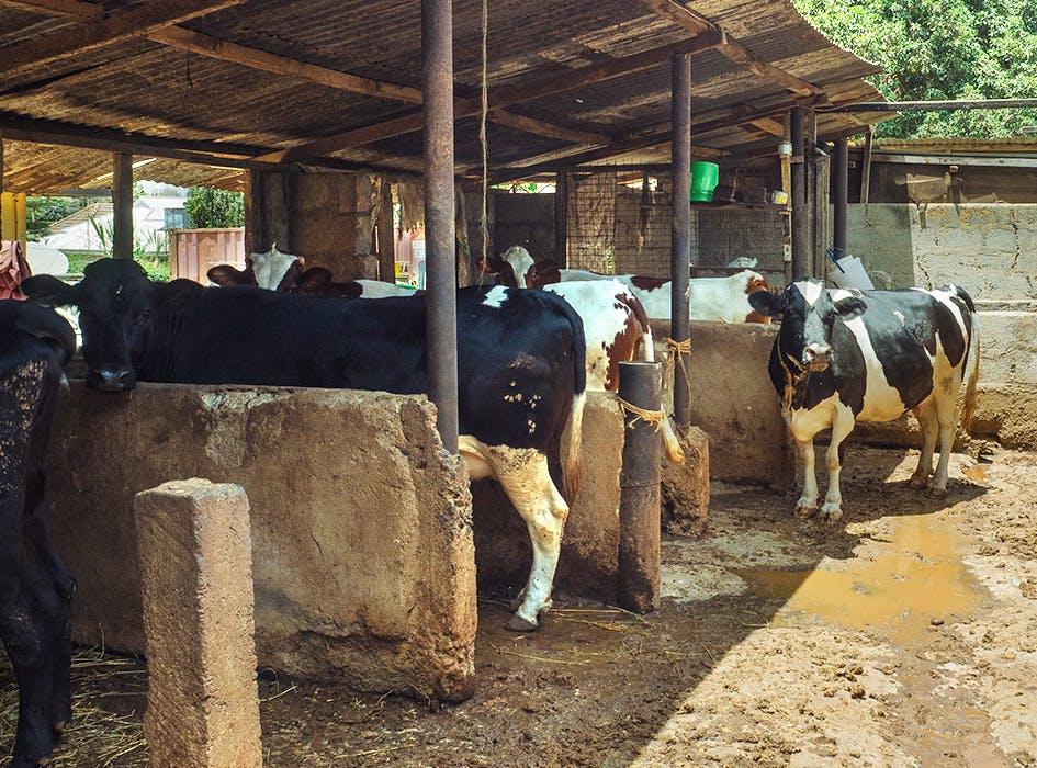Animal Welfare Volunteering in Tanzania - Arusha
