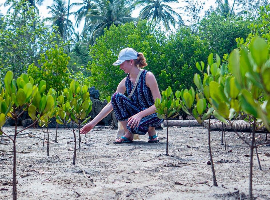 Rainforest and Coastal Conservation in Zanzibar